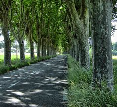 Plane tree shaded road in #Luberon, #Provence.
