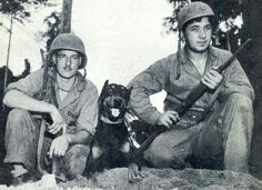 History of MWD Dobermans - Thank you for your service Heroes!