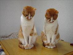 シンクロナイズド しょぼ~ん #cat #neko #猫