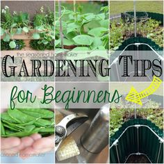 Are you a Beginning Gardener? It's time to start planning your spring garden and I have a few Gardening Tips that will help you get you on the right path. - The Seasoned Homemaker