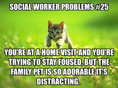 Social worker problems: family pet.  Pretty sure I'm going to have this issue.  That and getting distracted by the cute babies.