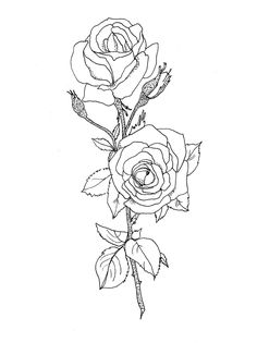 rose drawing   Rose Drawing & a New Setup