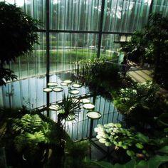 Conservatory in Shinjuku Gyoen National Gardens. #japantravel #tokyo #garden #park #conservatory