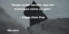 """""""Deseo poder escribir algo tan misterioso como un gato""""   - Edgar Allan Poe"""