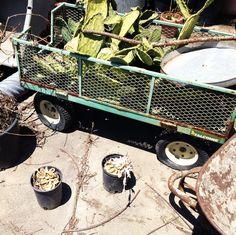 cacti cart. LMNOP