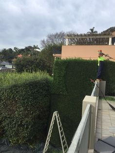 Ben's Tree & Garden offers excellent garden maintenance services that ensure your property will always look at its best. It is a great accomplishment if you managed to make possible having the garden you always wanted to have, but once achieved, much effort should go into maintaining that look.