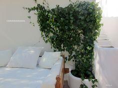 Formentera (in white) Ommmmmmm...........