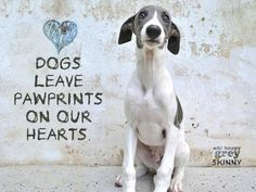 Dogs leave pawprints on our hearts Skinny Dog, Dog Words, Russian Wolfhound, All Breeds Of Dogs, Lurcher, Dog Quotes, Dog Sayings, Italian Greyhound, Dog Paws