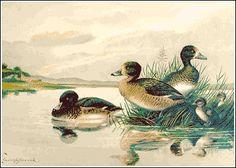 birds cliparts, free birds clip art, public domain birds picture