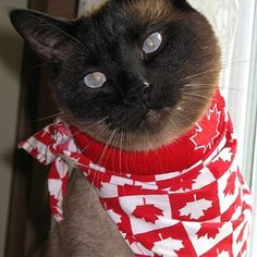 Oh Canada! Meow!