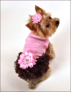 Alexis Ruffled Dog Dress......sweet matching hair clip available! Cute Dog  ClothesYorkie ... 09f27ed10cef