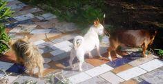 Mio, Tikka and Talita