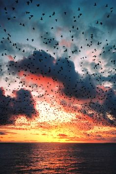 I chose this image because I liked how the multitude of birds contrast with the sky and the joyful, yet calming atmosphere it creates.
