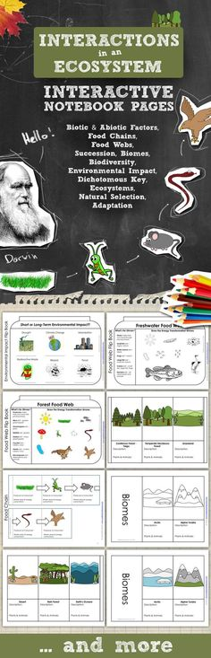 Ecosystems Science Interactive Notebook Pages - topics include abiotic & biotic factors, biodiversity, biomes, natural selection, selective breeding, parasite, host, niche, ecosystems, predator, prey, consumer, producer, decomposer, food chains, food webs