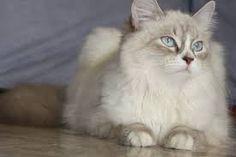 gatti - Cerca con Google