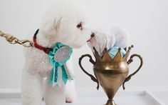 Rethink-ing the Best of Savannah. Stylist Rethink Design Studio. Photographer Tim Willoughby. Dog. Show Dog. Trophy. Ribbons.