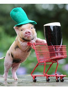 Oh, you know, just a pint-sized pig pushing a pint. Happy St. Patrick's weekend! http://www.peoplepets.com/people/pets/article/0,,20682466,00.html#