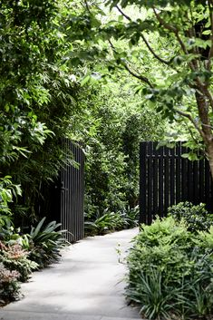 Garden Landscaping Elwood House by Matyas Architects – casalibrary Path Design, Fence Design, Design Ideas, Modern Garden Design, Landscape Design, Contemporary Landscape, Modern Design, Black Garden, Garden Fencing