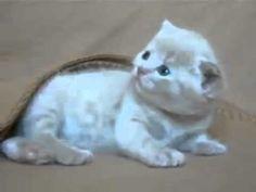 Cute Little Kitten - Very Funny - http://thatfunnyblog.com/funny-animals-pets/cute-little-kitten-very-funny/