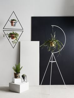 Decorative ways to hang your plants - Roomed