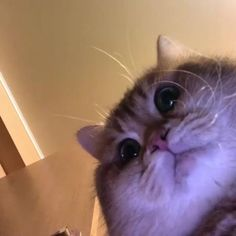 Pets Trying To Unlock Their Owners Phone And Fail Miserably - World's largest collection of cat memes and other animals Cute Baby Cats, Cute Funny Animals, Cute Baby Animals, Kittens Cutest, Cats And Kittens, Funny Cats, Siamese Cats, Meme Chat, Cute Cat Memes