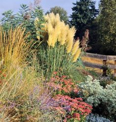 Best Ornamental Grasses for Midwest Gardens | Midwest Living