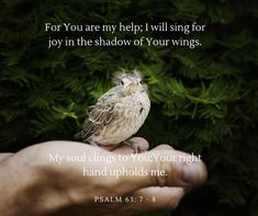Close Up Photography of White Brown Bird · Free Stock Photo Inspiring Quotes About Life, Inspirational Quotes, Psalm 31, Waiting On God, Corrie Ten Boom, Close Up Photography, Digital Photography, Photography Tips, Brown Bird