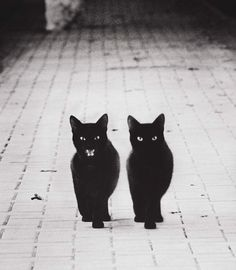 I love black cats! And I think they're good luck! Because,if you adopt one,you have a new friend And adopt a black cat! There's a ton at the shelter.if I could adopt a cat,I would like to get a black cat Cool Cats, I Love Cats, Crazy Cat Lady, Crazy Cats, Animals And Pets, Cute Animals, Baby Animals, Animal Gato, Gatos Cats