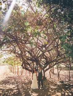 big tree portrait shot by Parker Young