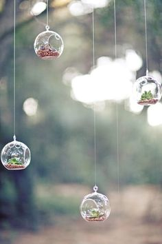 jl designs - hanging globes with succulents - Tom Thumb Nursery in Galveston actually has these globes.
