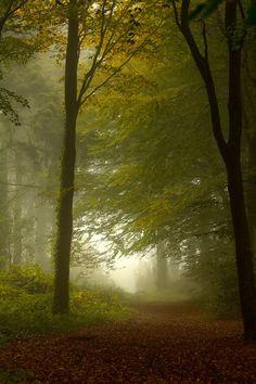 "90377:"" Misty woodlands by Rob HillsWebsite | Instagram | Facebook | Twitter"""