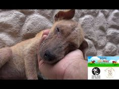 These Adorable Dogs Went From Homeless in Costa Rica to Happy, Healthy Pups Ready for Adoption all Thanks to Rescuers (VIDEO) | One Green Planet