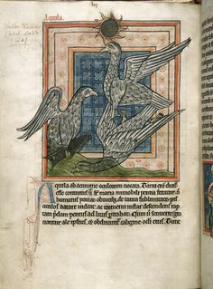 Eagles, English Bestiary (Harley 4751), author unknown, 13th century, housed at the British Library.