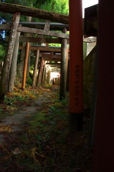Torii gates at Mt. Koya, Japan 高野山