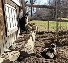 """Shelter Me Inc Barn Program recommends placing """"bonded pairs"""" to keep each other company. Photo credit: J Worth"""