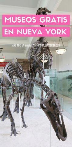 Museos Gratis Nueva York Lista Completa 2020 Guía De Ny En 2020 Museo De Nueva York Nueva York Viajes A New York