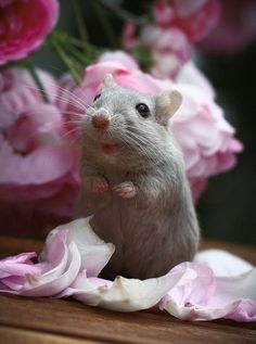 "~ Flower Eating Mouse ~ #Cutiepie !! ""You can eat My flowers anytime."""