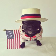 This adorable dog knows how to dress on the #Fourth! Happy Independence Day everyone! #HappyDog #PetPremium