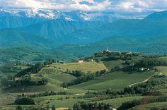 Vineyards in the Collio, Friuli-Venezia Giulia, Italy