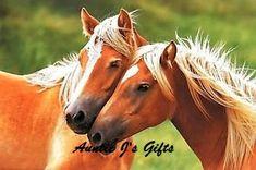 Pembroke Welsh Corgi - Alert and Affectionate Horse Photos, Horse Pictures, Haflinger Horse, Corgi Funny, Baby Horses, Pembroke Welsh Corgi, Rose Art, Show Horses, Beautiful Horses
