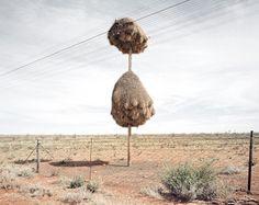 IdeaFixa » Os ninhos gigantes da África do Sul