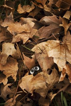 Wall-E 'In the leaves'
