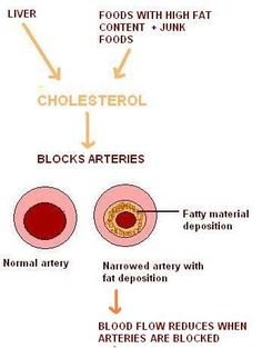 Ayuredic tips to reduce cholesterol -Ayurveda acharyas have said that increased kapha and medho dhatu (fat) cause almost all diseases that are caused by increased cholesterol. Increased kapha and medho dhatu obstruct the body channels called srotas. Hence they advise the diet to reduce kapha and medas to avoid these diseases.