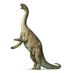 Information about dinosaurs from the DK Find Out website for kids. Improve your knowledge on dinosaur facts and learn more with DK Find Out. Dinosaur Information, Dinosaur Facts, Fun Facts For Kids, Jurassic Park World, Prehistoric Creatures, Prehistory, Zoology, Animals And Pets, Animales
