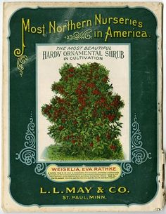 The Back Cover Of 1908 L May Catalog Showcases Most Beautiful Hardy Ornamental