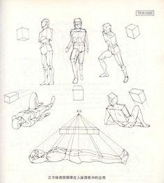 人体造型基础——人体透视 - 水木白艺术坊 - 贵阳画室 高考美术培训