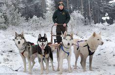 husky sledge guest transportation