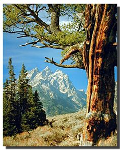 Scenic Tree and Teton Poster Landscape Posters, County Park, Snow Mountain, Beautiful Landscapes, Natural Beauty, Grass, Art Pieces, Environment, Calm