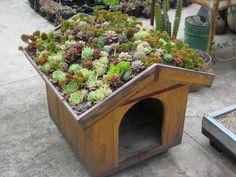 Dog House Rooftop Succulent Garden