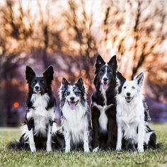 These guys are to cute. Dogs to the left: @philly_sheepdogs Dogs to the right: @kelly_bove Photo owner: @kelly_bove (